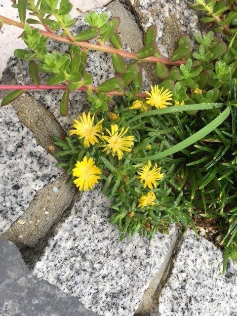 f:id:mimozaai:20160912215246j:plain