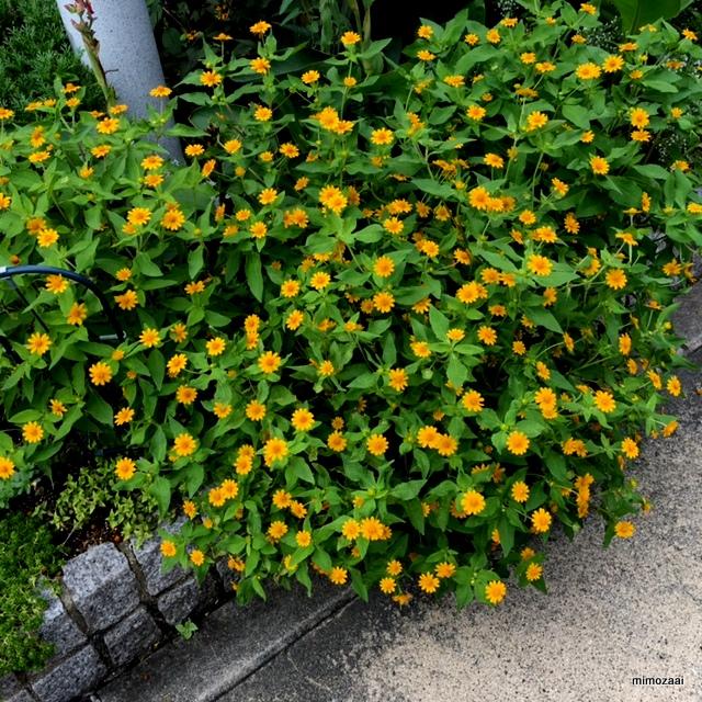 f:id:mimozaai:20160921202121j:plain