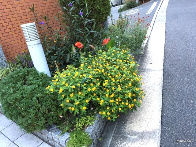 f:id:mimozaai:20160923211251j:plain