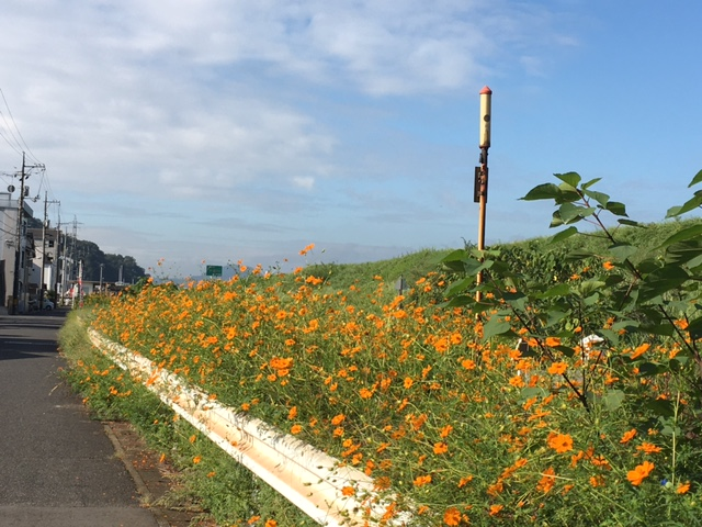 f:id:mimozaai:20160928052357j:plain