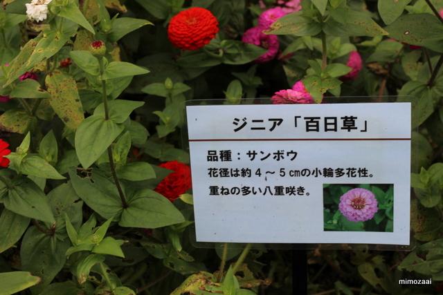f:id:mimozaai:20161012213720j:plain