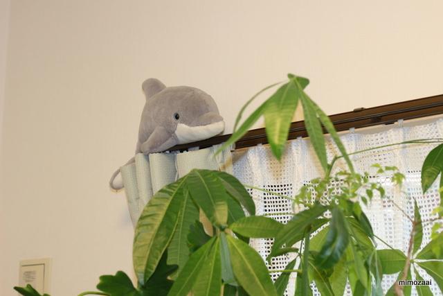 f:id:mimozaai:20170130135924j:plain