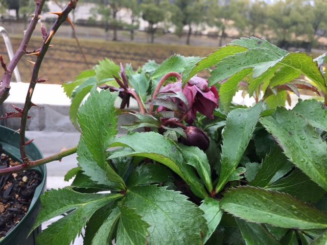 f:id:mimozaai:20170207222042j:plain
