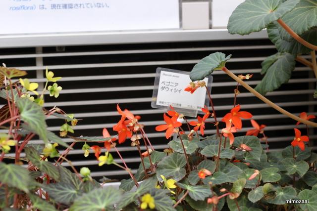f:id:mimozaai:20170209193227j:plain