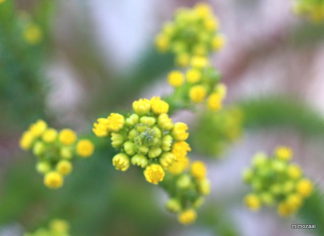 f:id:mimozaai:20170215204418j:plain