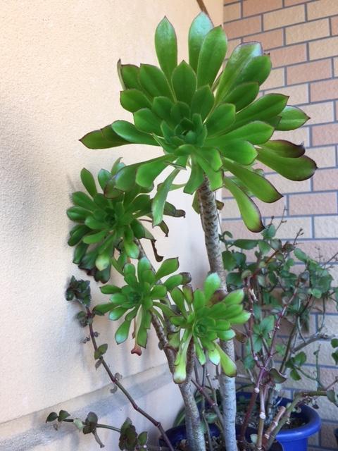 f:id:mimozaai:20170228203012j:plain