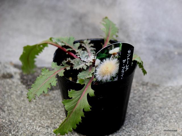 f:id:mimozaai:20170303210027j:plain