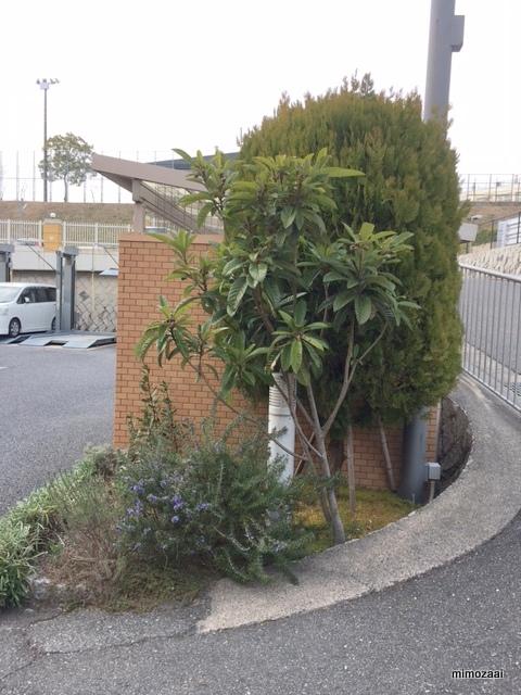 f:id:mimozaai:20170306212012j:plain