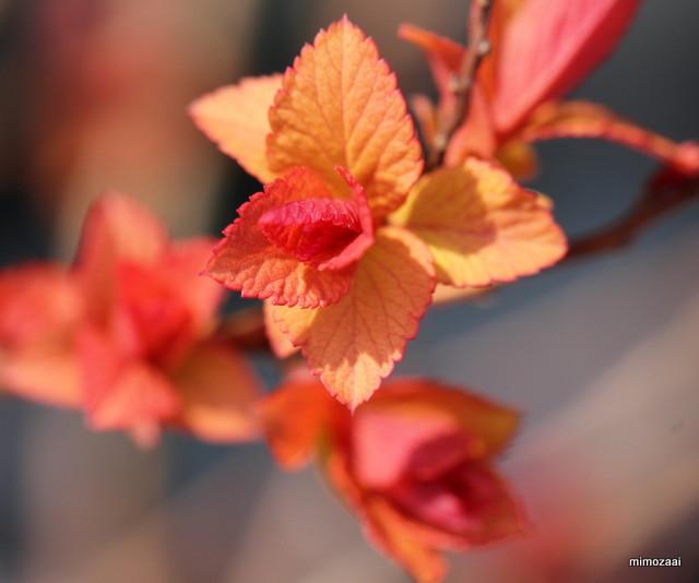f:id:mimozaai:20170330213539j:plain