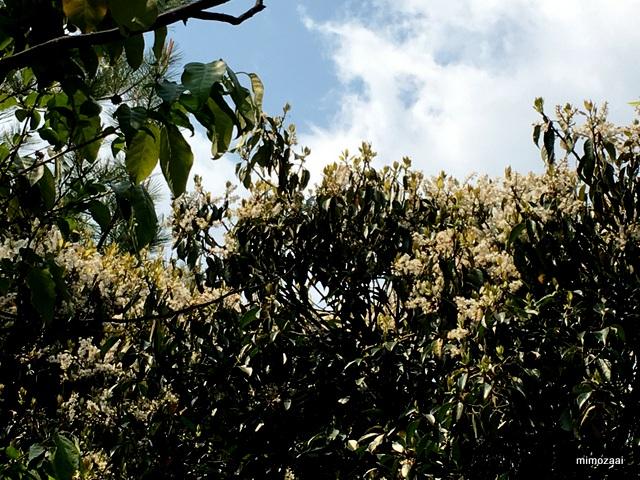f:id:mimozaai:20170429201802j:plain