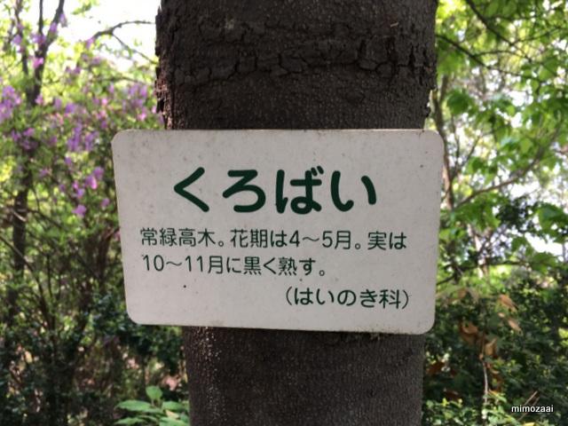 f:id:mimozaai:20170429201810j:plain