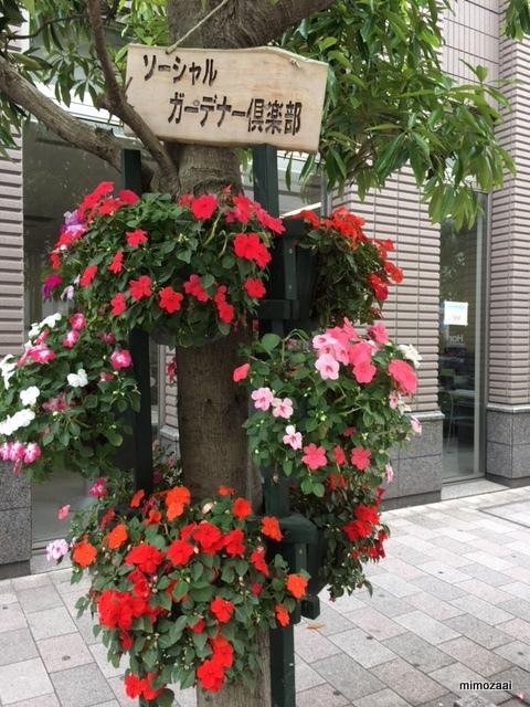 f:id:mimozaai:20170517205658j:plain