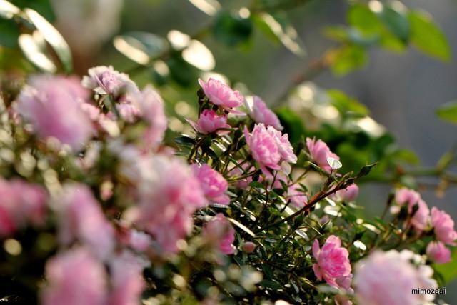 f:id:mimozaai:20170521215331j:plain