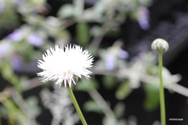 f:id:mimozaai:20170526203646j:plain