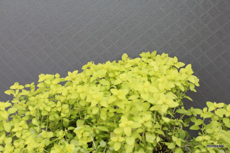 f:id:mimozaai:20170615215951j:plain