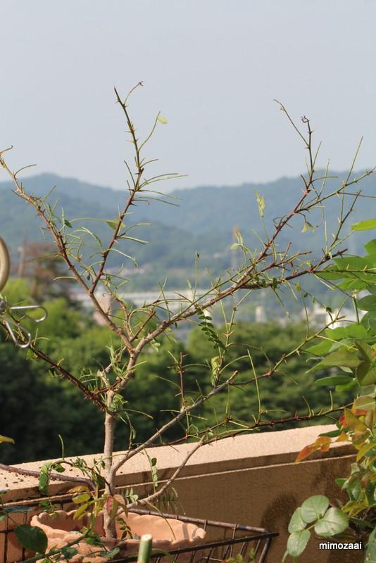 f:id:mimozaai:20170623194047j:plain