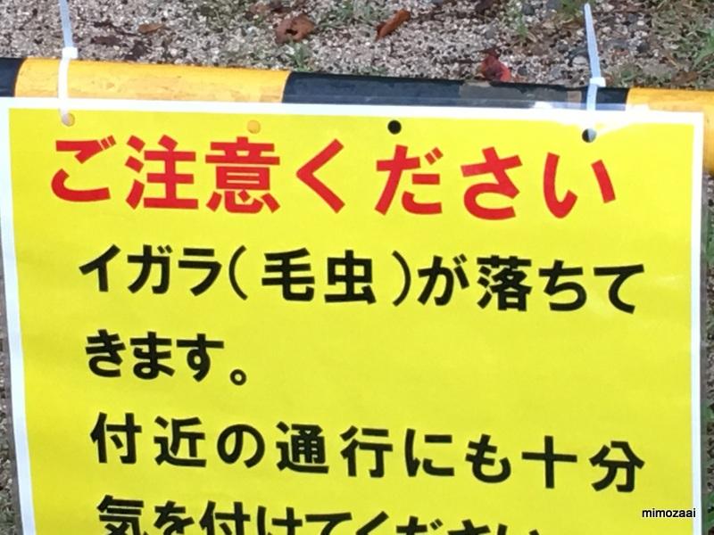 f:id:mimozaai:20170909194031j:plain