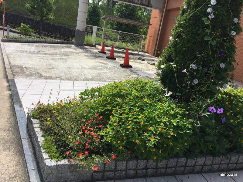 f:id:mimozaai:20170910210027j:plain