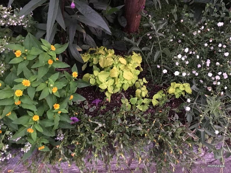 f:id:mimozaai:20170914215657j:plain