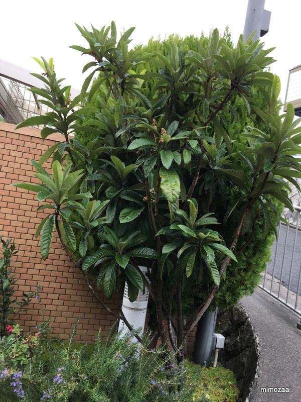 f:id:mimozaai:20171109045948j:plain