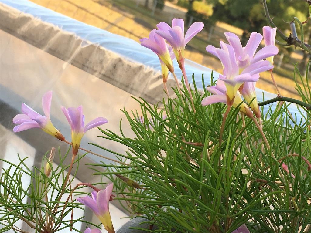 f:id:mimozaai:20171129224344j:image