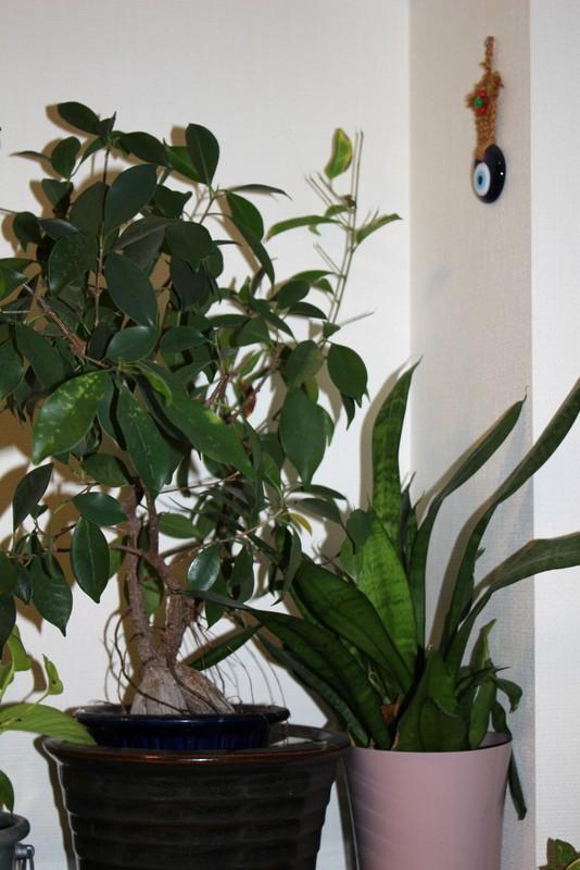 f:id:mimozaai:20171227161842j:plain
