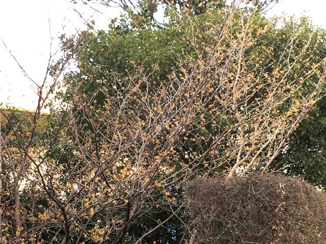 f:id:mimozaai:20180131195444j:plain
