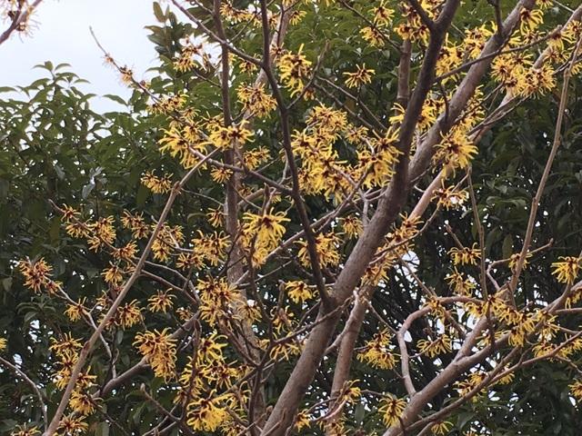 f:id:mimozaai:20180216211432j:plain