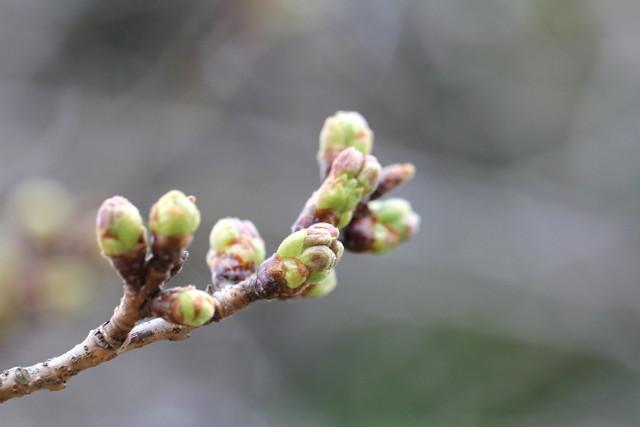 f:id:mimozaai:20180318191503j:plain