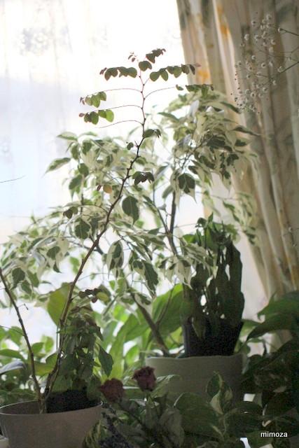 f:id:mimozaai:20181218195935j:plain