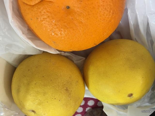 f:id:mimozaai:20190227203115j:plain