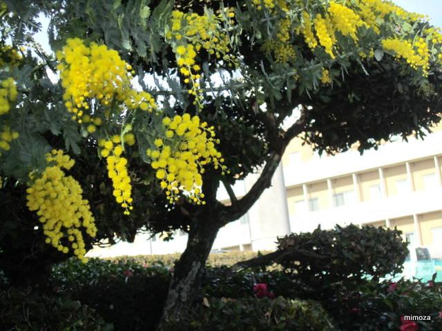 f:id:mimozaai:20190305202813j:plain