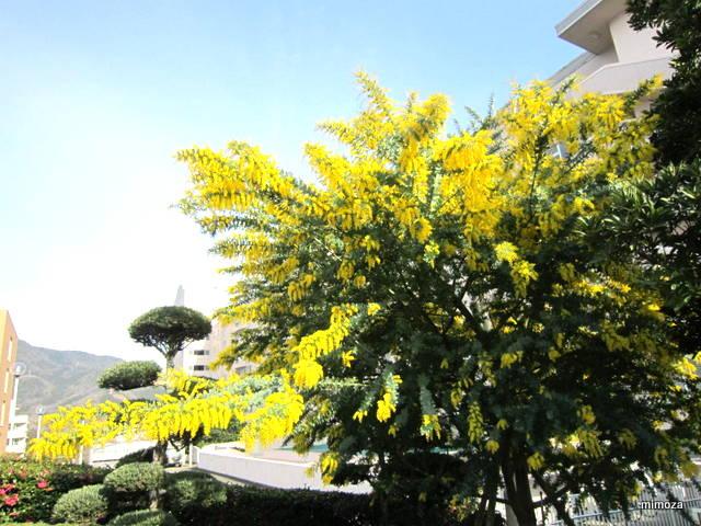 f:id:mimozaai:20190305203036j:plain