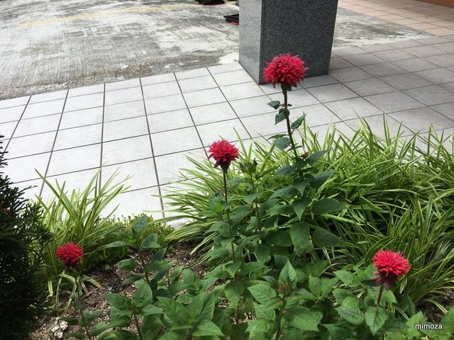 f:id:mimozaai:20190625200128j:plain