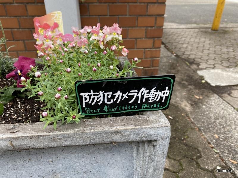 f:id:mimozaai:20191211215836j:plain