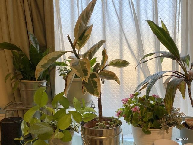 f:id:mimozaai:20191213203154j:plain