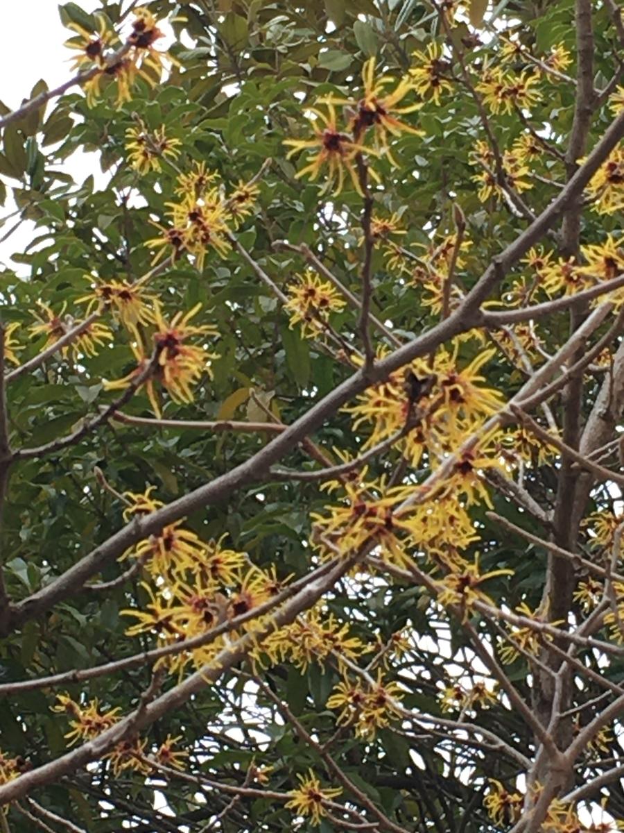 f:id:mimozaai:20200216215939j:plain