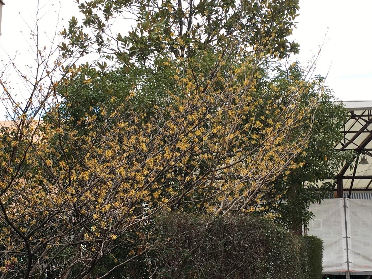 f:id:mimozaai:20200216225454j:plain