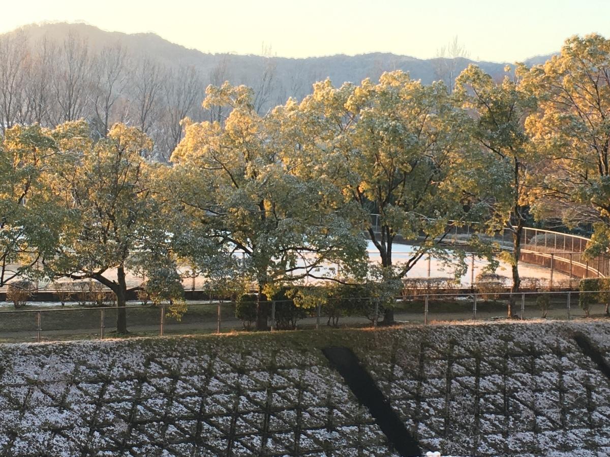 f:id:mimozaai:20200219191915j:plain