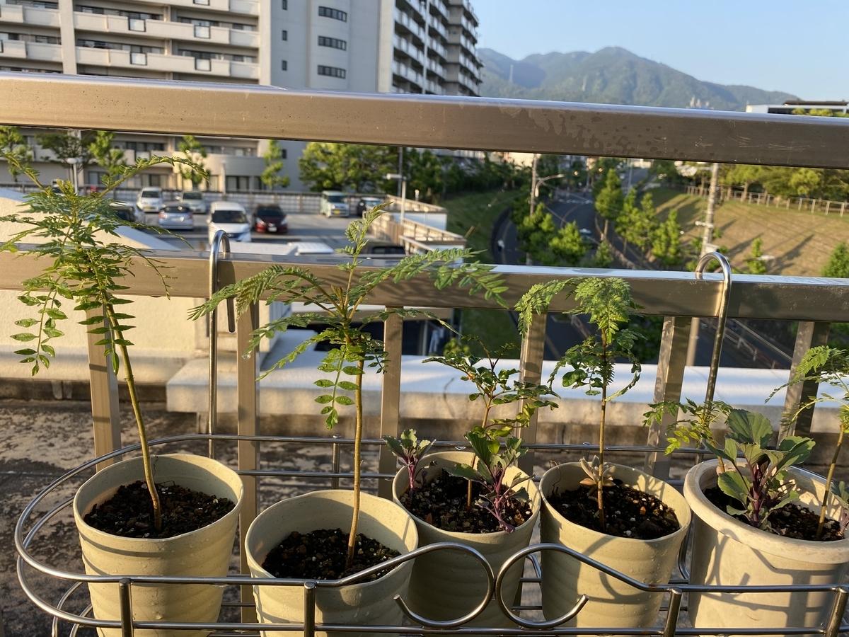 f:id:mimozaai:20200607205402j:plain