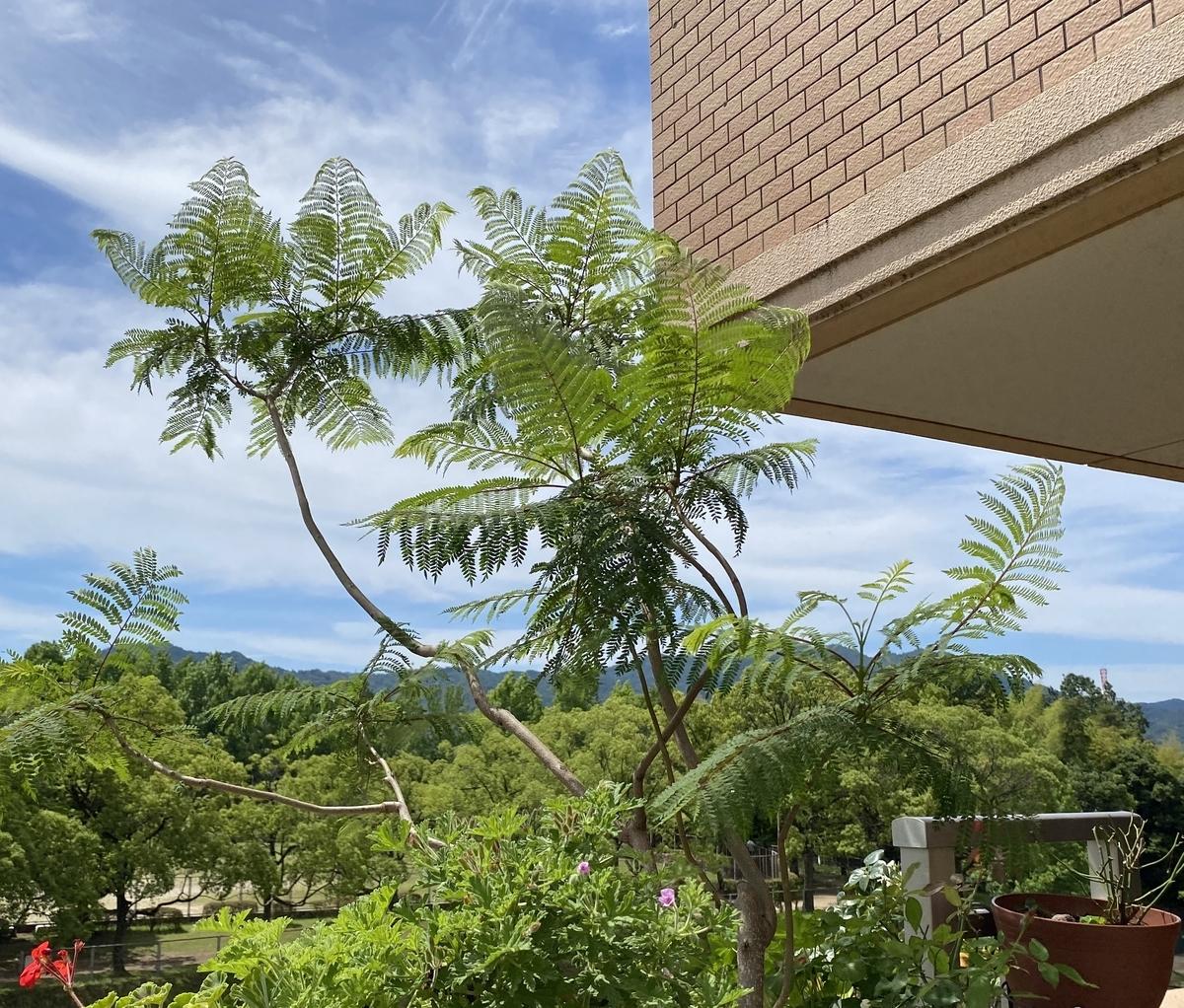 f:id:mimozaai:20200618191233j:plain