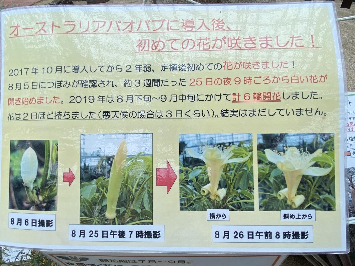 f:id:mimozaai:20200705195906j:plain