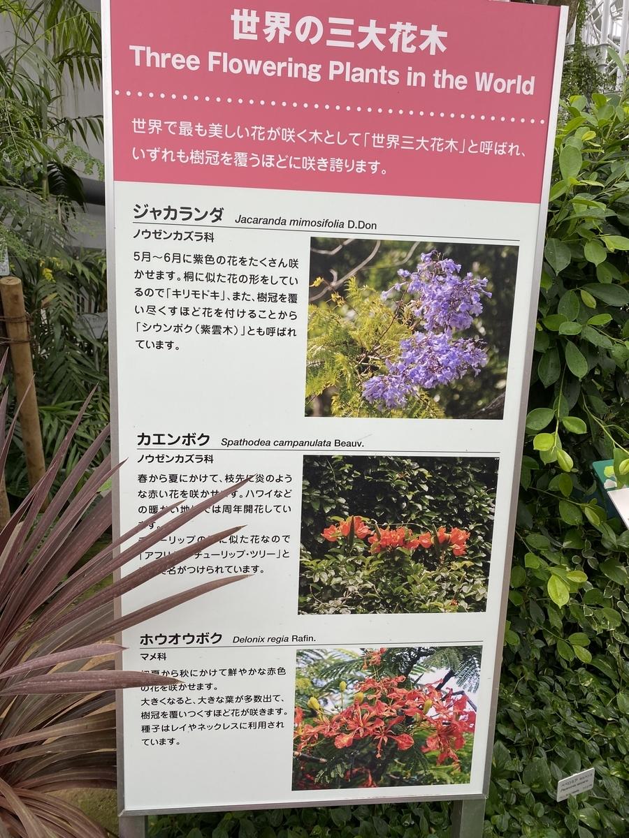 f:id:mimozaai:20200705200313j:plain