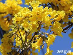f:id:mimozaai:20200719193021j:plain