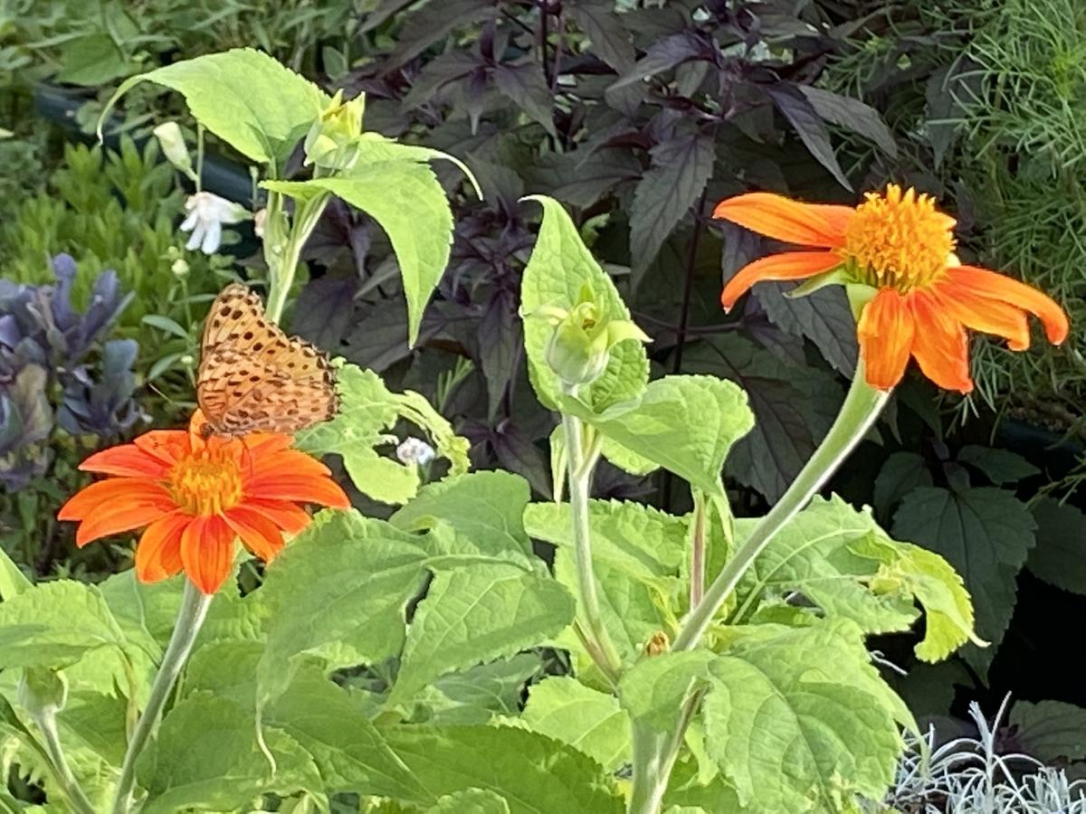 f:id:mimozaai:20200731183602j:plain