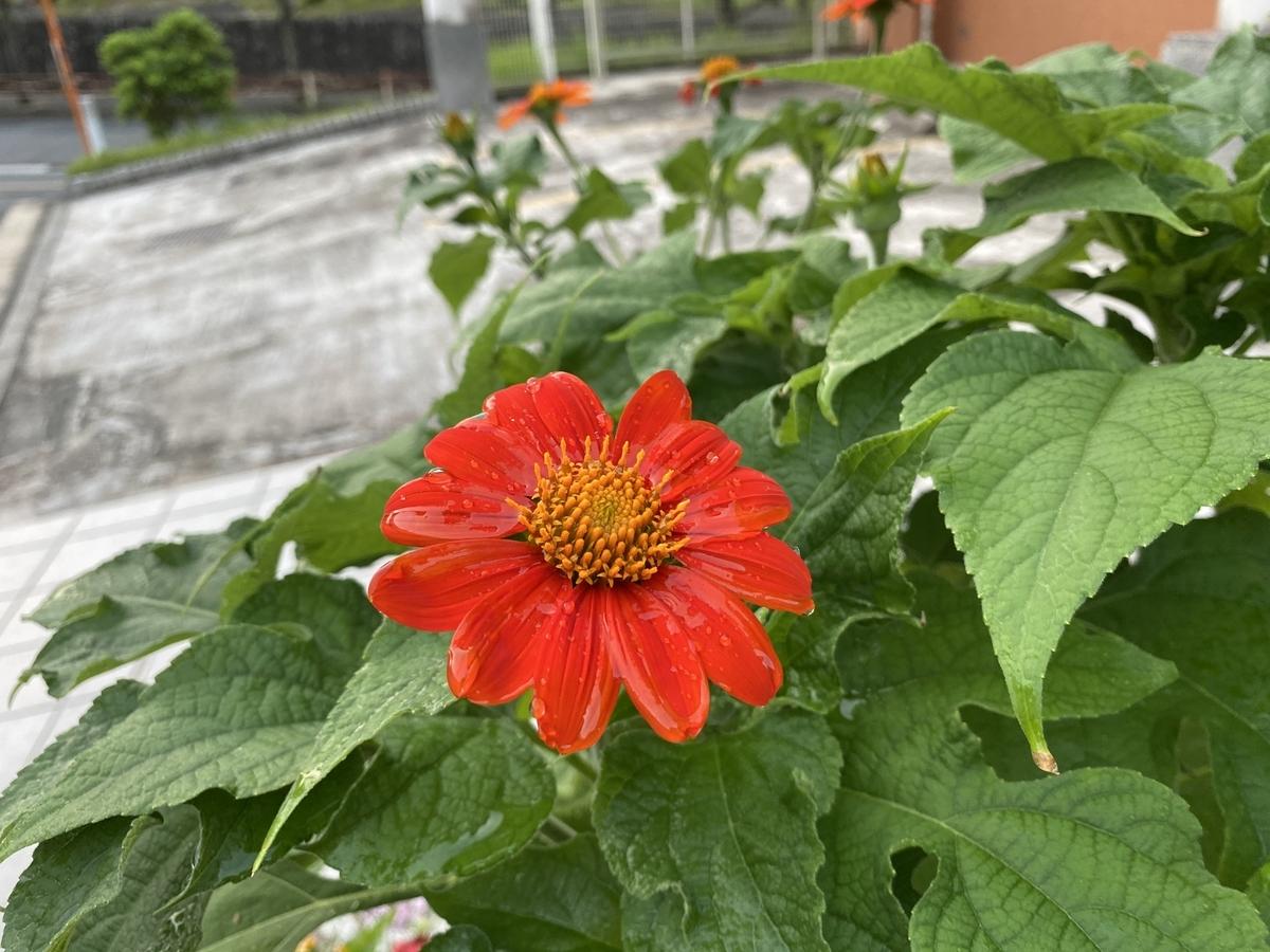 f:id:mimozaai:20200815161335j:plain