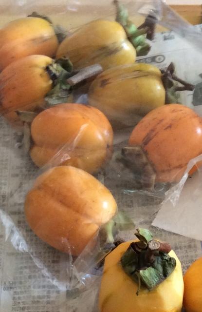 f:id:mimozaai:20201014201256j:plain