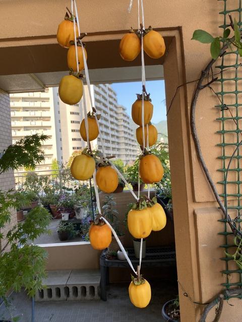 f:id:mimozaai:20201014201326j:plain