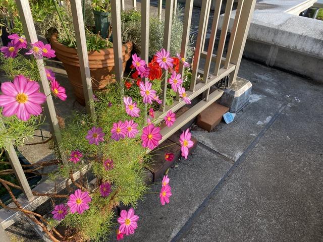 f:id:mimozaai:20201014203053j:plain