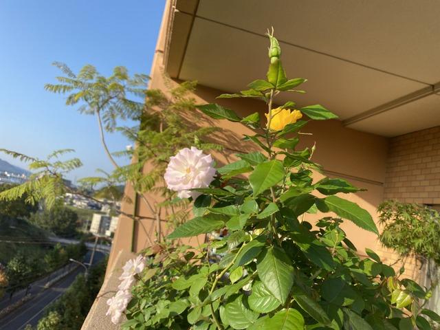 f:id:mimozaai:20201014203158j:plain